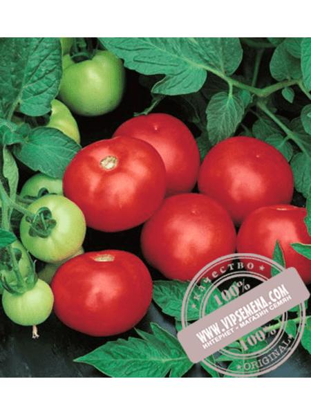 Топкапи F1 (Topkapi F1) семена томата детерминантного Vilmorin, оригинальная упаковка (1000 семян)