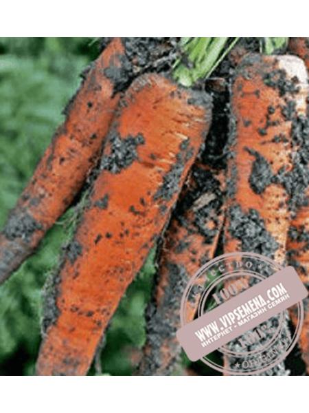Траффорд F1 (Trafford F1) Ǿ 1.6-1.8 семена моркови типа Флакке Rijk Zwaan, оригинальная упаковка (1 млн. семян)