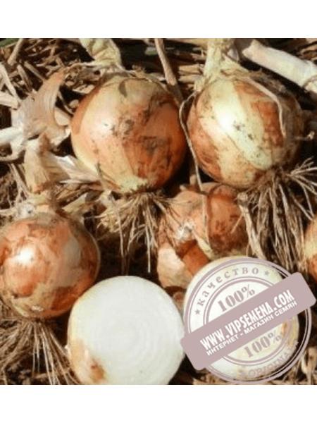 Вольф F1 (Volf F1) купить семена лука озимого Hazera, оригинальная упаковка (250000 семян)