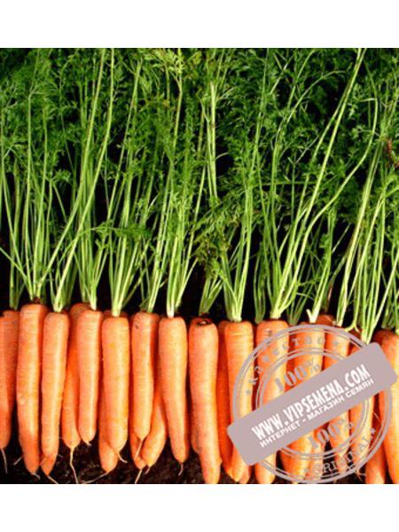 Волкано F1 (Volkano F1) семена моркови Нантского типа Vilmorin, оригинальная упаковка (100000 семян VD)