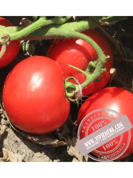 Волна F1 (Volna F1) семена томата детерминантного Vilmorin, оригинальная упаковка (1000 семян)