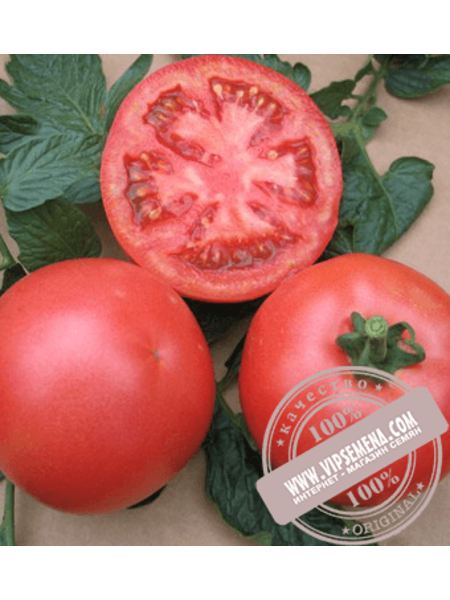 VP-1 F1 (VP-1 F1) семена томата индетерминантного розового Vilmorin, оригинальная упаковка (1000 семян)