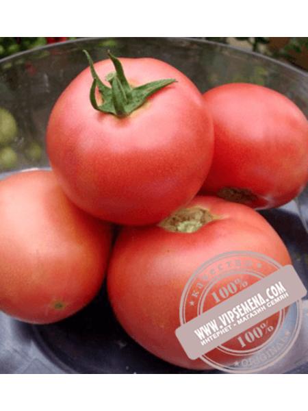 VP-2 F1 (VP-2 F1) семена томата индетерминантного розового Vilmorin, оригинальная упаковка (1000 семян)