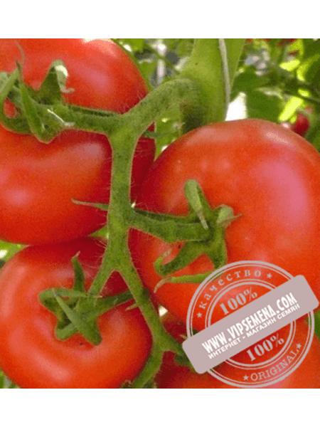 Юсуф 408 F1 (Yusuf 408 F1) семена томата детерминантного Enza Zaden, оригинальная упаковка (500 семян)