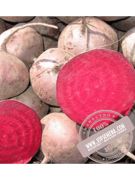 Зеппо F1 (Zeppo F1) семена свеклы столовой округлой Rijk Zwaan, оригинальная упаковка (100000 семян) калибр 2.75-3.50
