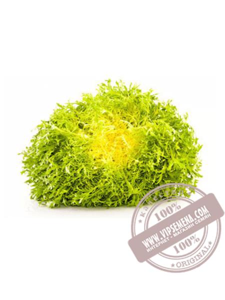 Зидан (Zidan) семена салата типа Эндивий Enza Zaden,оригинальная упаковка (5000 семян)