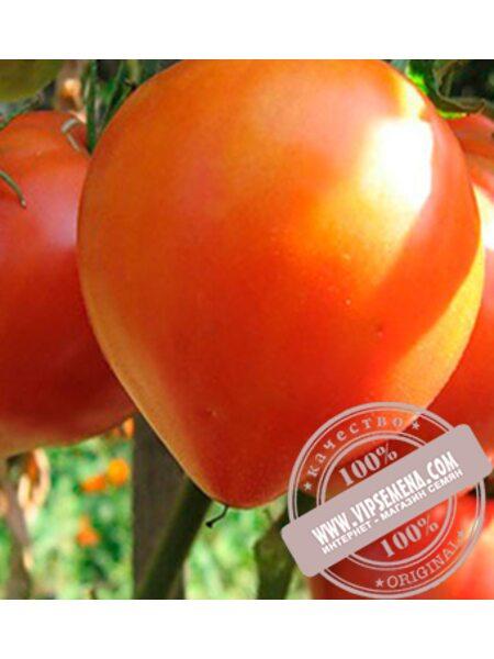 Абаканский Розовый (Abakanskij Rozovuj) семена индетерминантного томата Элитный Ряд, оригинальная упаковка (5 грамм)