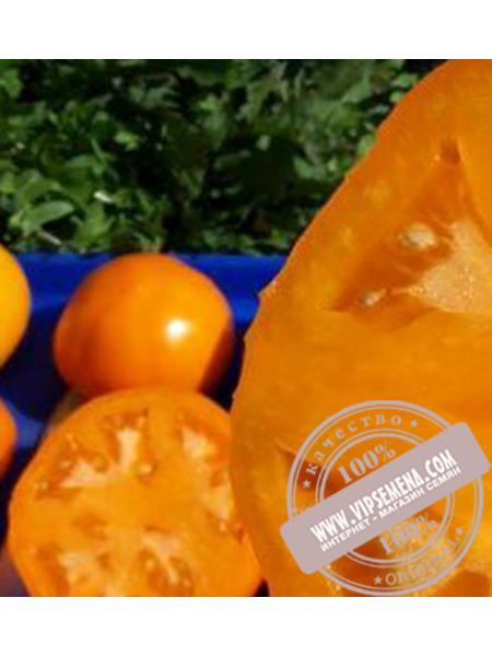 Алтайский Оранжевый (Altaiski Oranjevui) семена индетерминантного томата Элитный Ряд, оригинальная упаковка (1 грамм)