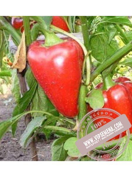 Богатырь (Bogatur) семена сладкого перца Элитный Ряд, оригинальная упаковка (1000 грамм)