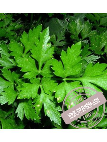 Гигант Италии (Gigant Italii) семена петрушки листовой Элитный Ряд, оригинальная упаковка (500 грамм)