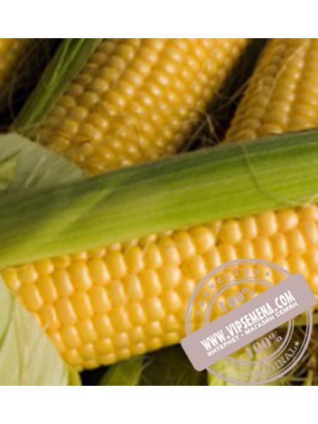 Порумбень – 198 F1 (Porymben-198 F1) семена кукурузы Элитный Ряд, оригинальная упаковка (1000 грамм)