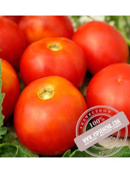 Спартак (Spartak) семена детерминантного томата  Элитный Ряд, оригинальная упаковка (250 грамм)