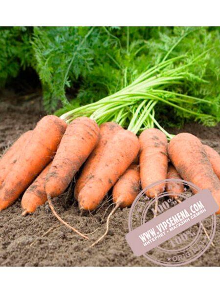Карини (Carini) семена моркови тип Флакке Bejo, оригинальная упаковка (50 грамм)