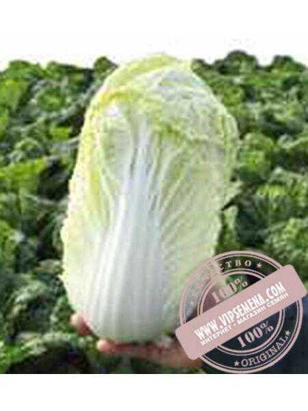 Маноко F1 (Manoko F1) семена пекинской капусты Bejo, оригинальная упаковка (10000 семян, прецизионные)