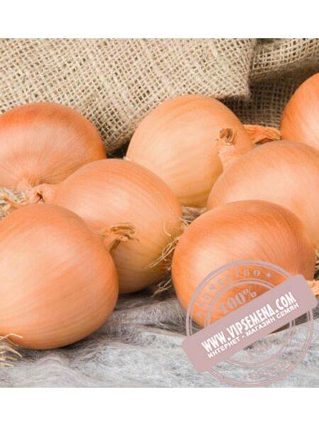 Алонсо F1 (Alonso F1) семена лука репчатого Bejo, оригинальная упаковка (250000 семян)