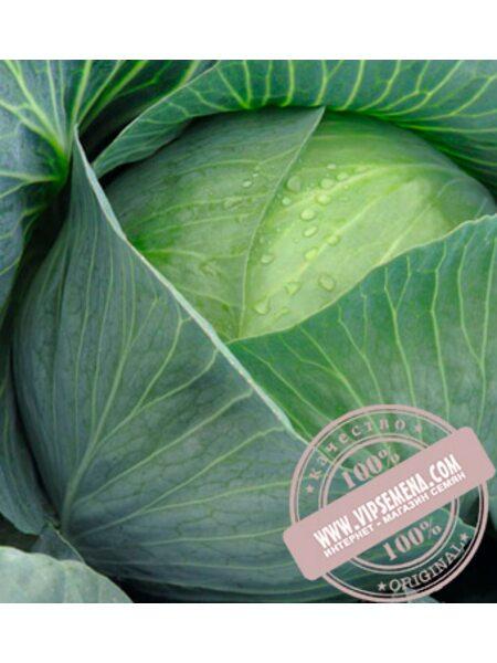 Амтрак F1 (Amtrak F1) семена капусты белокочанной Bejo, оригинальная упаковка (2500 семян, сортированные)
