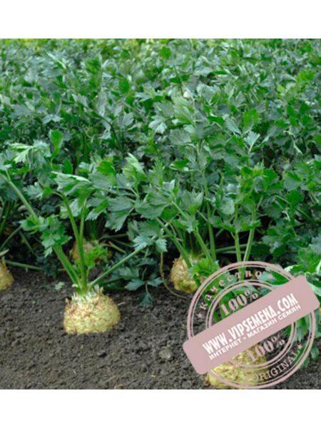 Диамант (Diamant) семена сельдерея корневого Bejo, оригинальная упаковка (10000 семян)