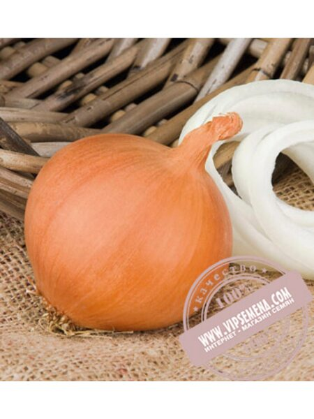Манас F1 (Manas F1) семена лука репчатого Bejo, оригинальная упаковка (250000 семян)