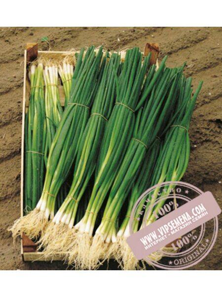 Параде (Parade) семена лука на перо Bejo, оригинальная упаковка (10000 семян, прецизионные)