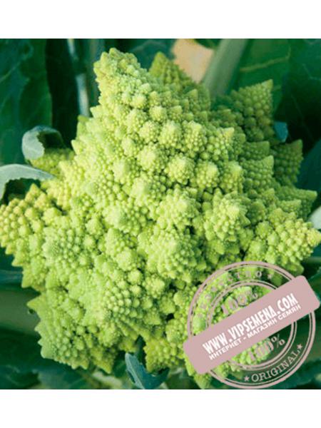 Вероника F1 (Veronica F1) семена цветной капусты Bejo, оригинальная упаковка (2500 семян, прецизионные)
