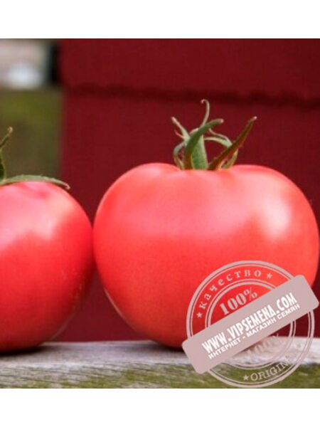 Афен F1 (Afen F1) семена томата розового, индетер., Clause, оригинальная упаковка (1000 семян)