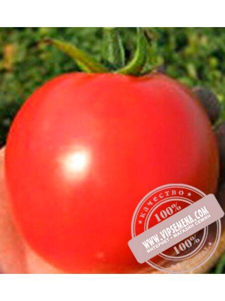 Акела F1 (Akela F1) семена томата дет. для свежего рынка, Clause, оригинальная упаковка 1000 семян)