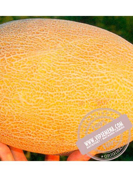 Амал F1 (Amal F1) семена дыни, Clause, оригинальная упаковка (1000 семян)