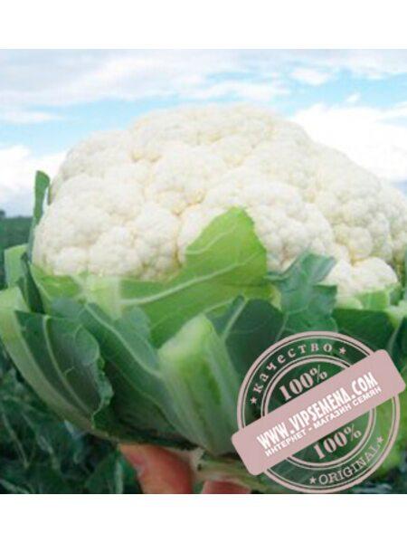 Ардент F1 (Ardent F1) семена цветной капусты Clause, оригинальная упаковка (2500 семян)