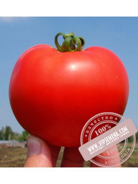 Багира F1 (Bagira F1) семена томата дет. для свежего рынка, Clause, оригинальная упаковка 5 гр.)