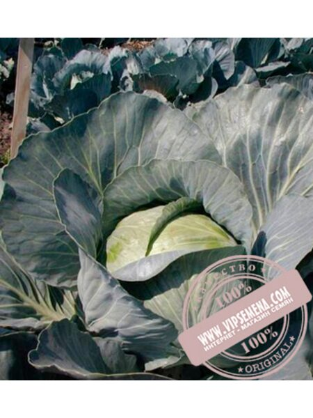 Бригадир F1 (Brigadir F1) семена белокочанной, средней капусты Clause, оригинальная упаковка (10000 семян)