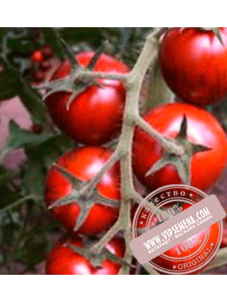 Бронсон F1 (Bronson F1) семена томата черного, индетер, Clause, оригинальная упаковка (250 семян)