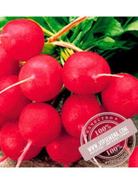 Джолли (Djolli) семена редиса Clause, оригинальная упаковка (100 гр.)