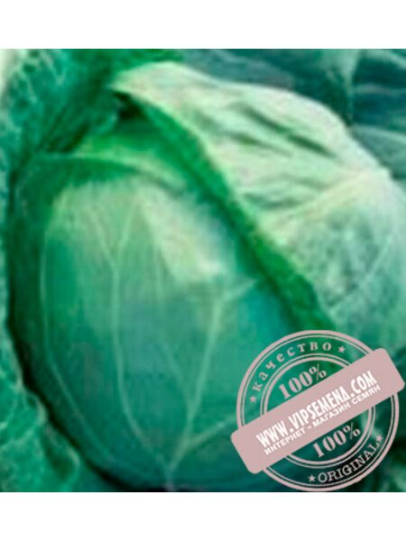 Гигант F1 (Gigant F1) семена белокочанной, средней капусты Clause, оригинальная упаковка (2500 семян)