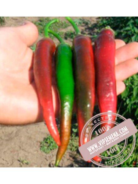 Импала F1 (Impala F1) семена перца сладкого, Clause, оригинальная упаковка (5 гр.)