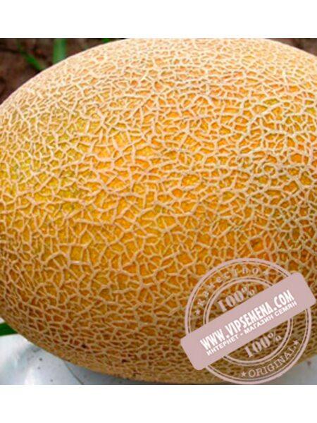 Карамель F1 (Карамель F1) семена дыни, Clause, оригинальная упаковка (1000 семян)