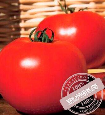 Каста (Супернова) F1 (Kasta F1) семена томата дет. для свежего рынка ... 5c5bf060851