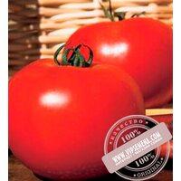 Каста (Супернова) F1 (Kasta F1) семена томата дет. для свежего рынка, Clause, оригинальная упаковка 5000 семян)