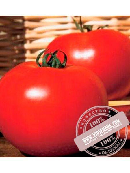 Каста (Супернова) F1 (Kasta F1) семена томата дет. для свежего рынка, Clause, оригинальная упаковка 1000 семян)