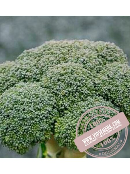 Корос F1 (Koros F1) семена капусты брокколи Clause, оригинальная упаковка (1000 семян)