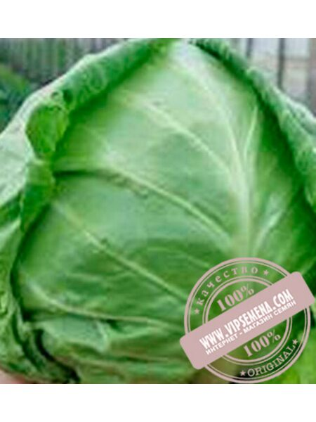 Легат F1 (Legat F1) семена белокочанной, ранней капусты Clause, оригинальная упаковка (1000 семян)