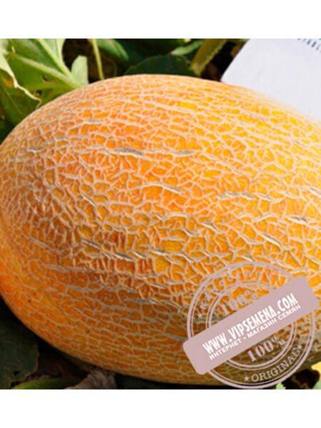 Мазин F1 (Mazin F1) семена дыни, Clause, оригинальная упаковка (1000 семян)