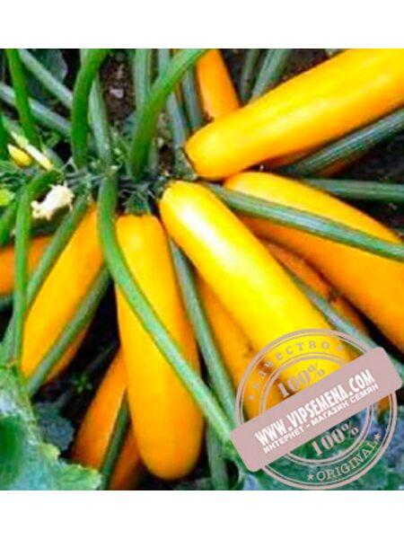 Мериголд F1 (Merigold F1) семена кабачка, Clause, оригинальная упаковка (500 семян)