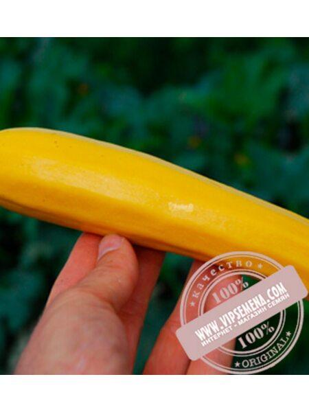 Санлайт F1 (Sunligthe F1) семена кабачка, Clause, оригинальная упаковка (1000семян)