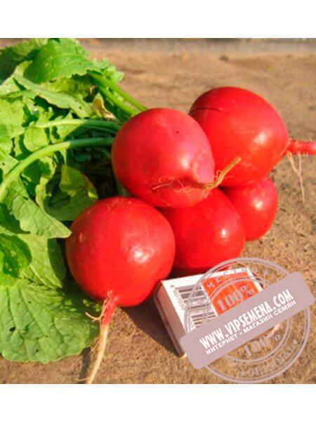 Дабел F1 (Dabel F1) Ǿ 2.75-3.00 семена редиса Nunhems, оригинальная упаковка (10000-семян)