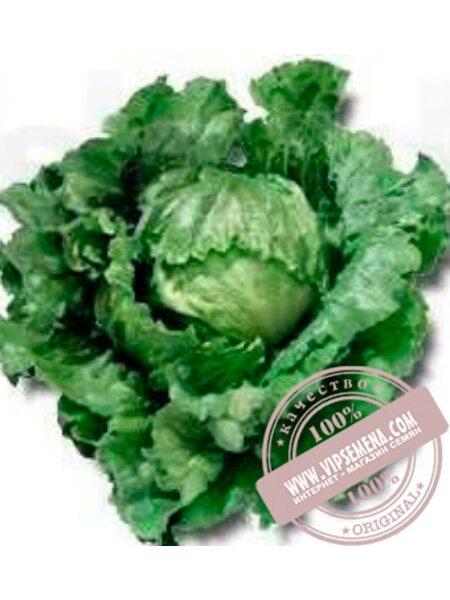 Галера (Galera) семена кочанного салата тип Айсберг Nunhems, оригинальная упаковка (5000-семян-драже)