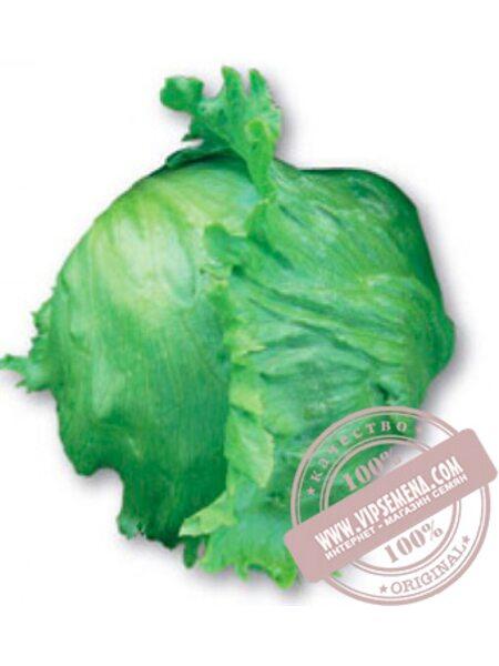 Куала (Cuala) семена кочанного салата тип Айсберг Nunhems, оригинальная упаковка (5000-семян-драже)