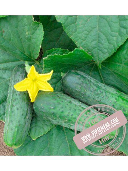 Спарта F1 (Sparta F1) семена огурца пчелоопыляемого Nunhems, оригинальная упаковка (1000-семян)