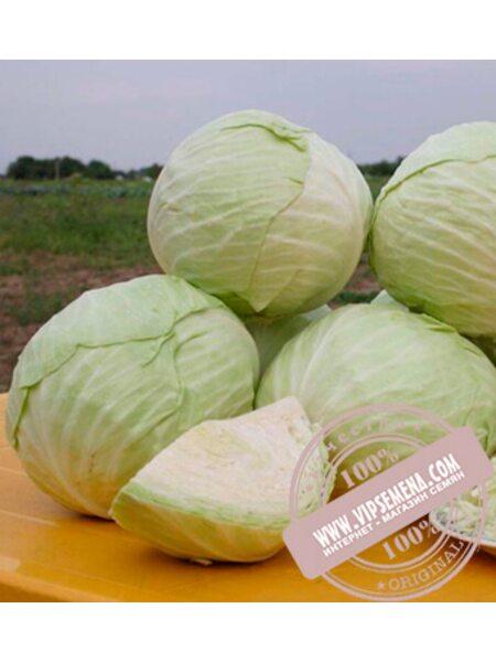 Акварель F1 (Acvarel F1) семена капусты белокочанной Nunhems, оригинальная упаковка (2500 семян)