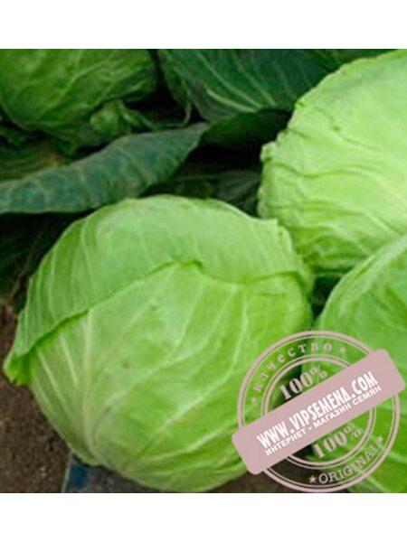 Анадоль F1 (Anadol F1) семена капусты белокочанной Nunhems, оригинальная упаковка (2500 семян)