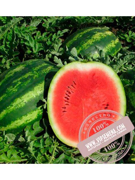 Думара F1 (Dumara F1) семена арбуза тип Кримсон Свит Nunhems, оригинальная упаковка (1000 семян)